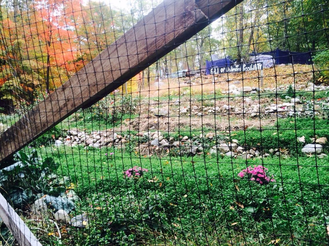 Farm-A-Yard